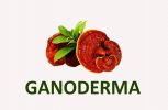 Ganoderma lucidum medicinal mushrooms products