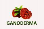 Ganoderma lucidum medicinal mushrooms products